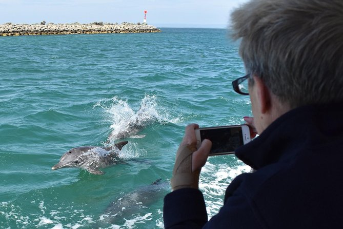 Mandurah Dolphin Island Adventure - Accommodation Perth