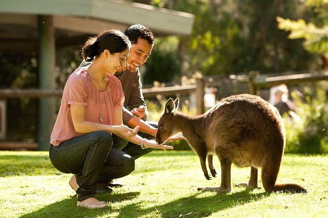 Very Best of Perth Tour - Wildlife Park  City Highlights Tour - Accommodation Perth