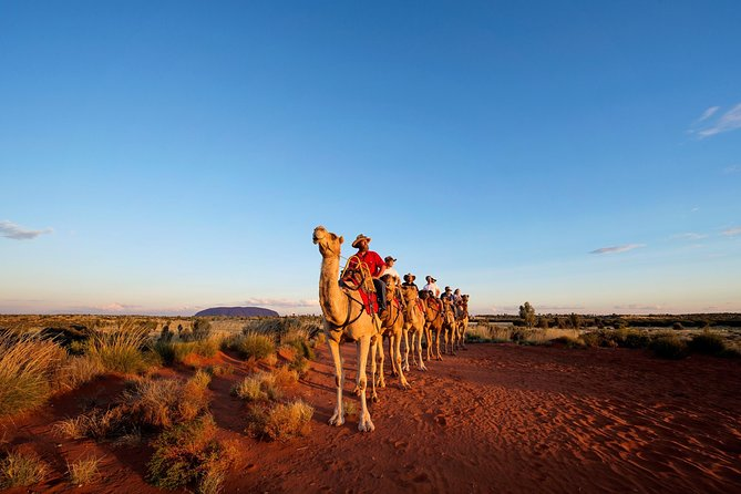 Uluru Camel Express Sunrise or Sunset Tours - Accommodation Perth