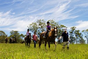 Port Macquarie Horse Riding Centre - Accommodation Perth