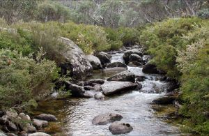 Thredbo River Track - Accommodation Perth