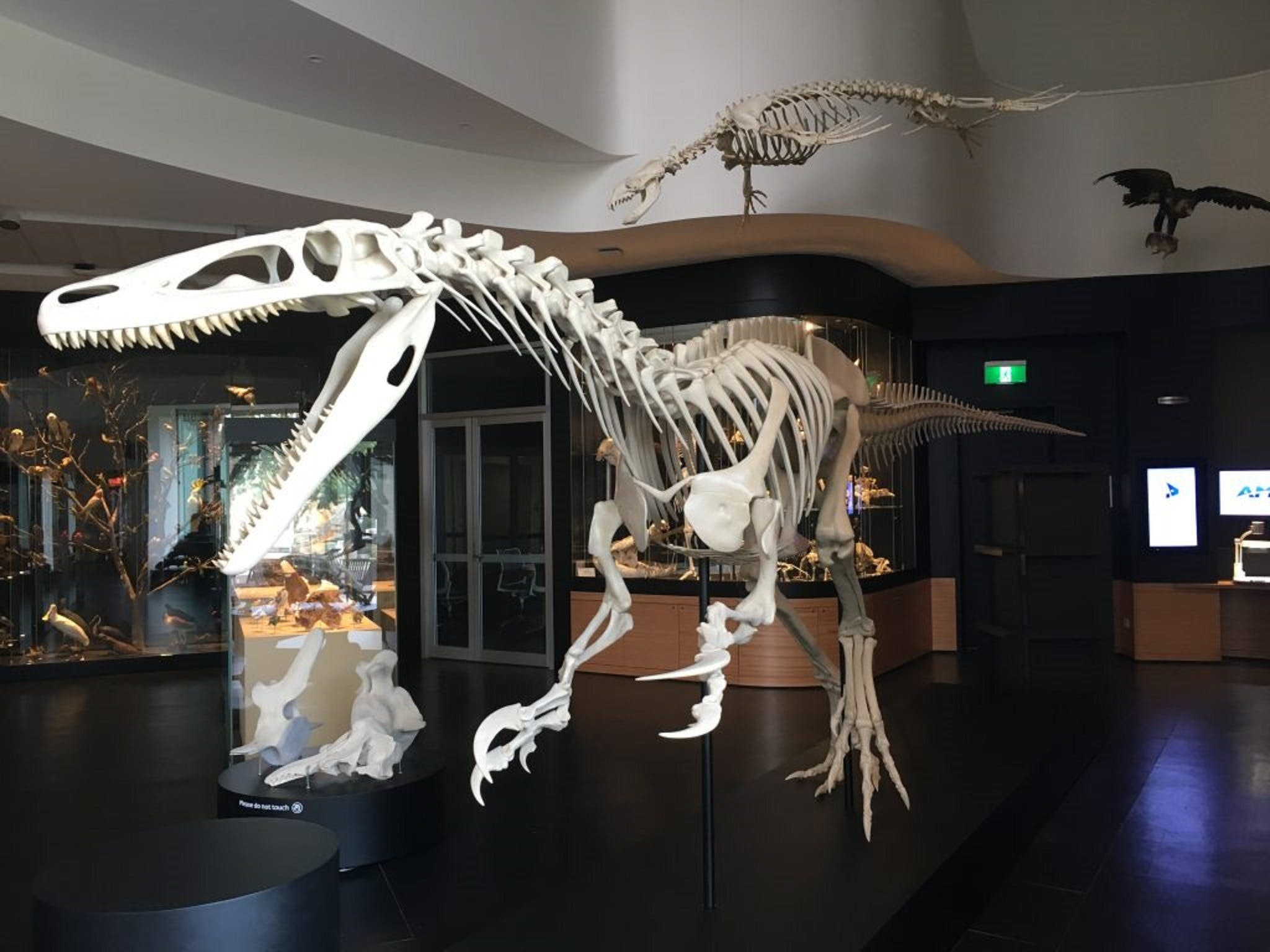 UNE Natural History Museum - Accommodation Perth