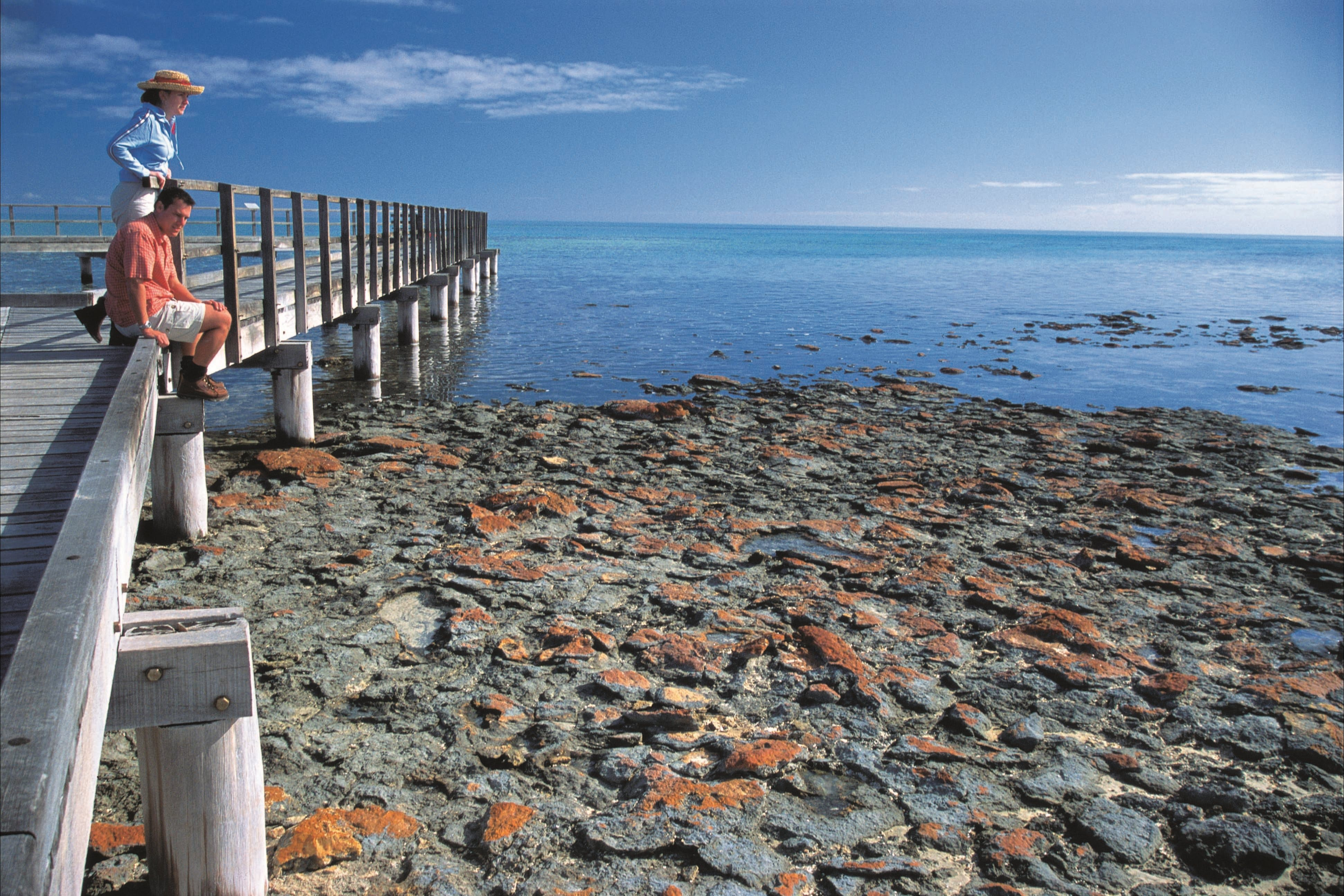 Hamelin Pool Stromatolites - Accommodation Perth