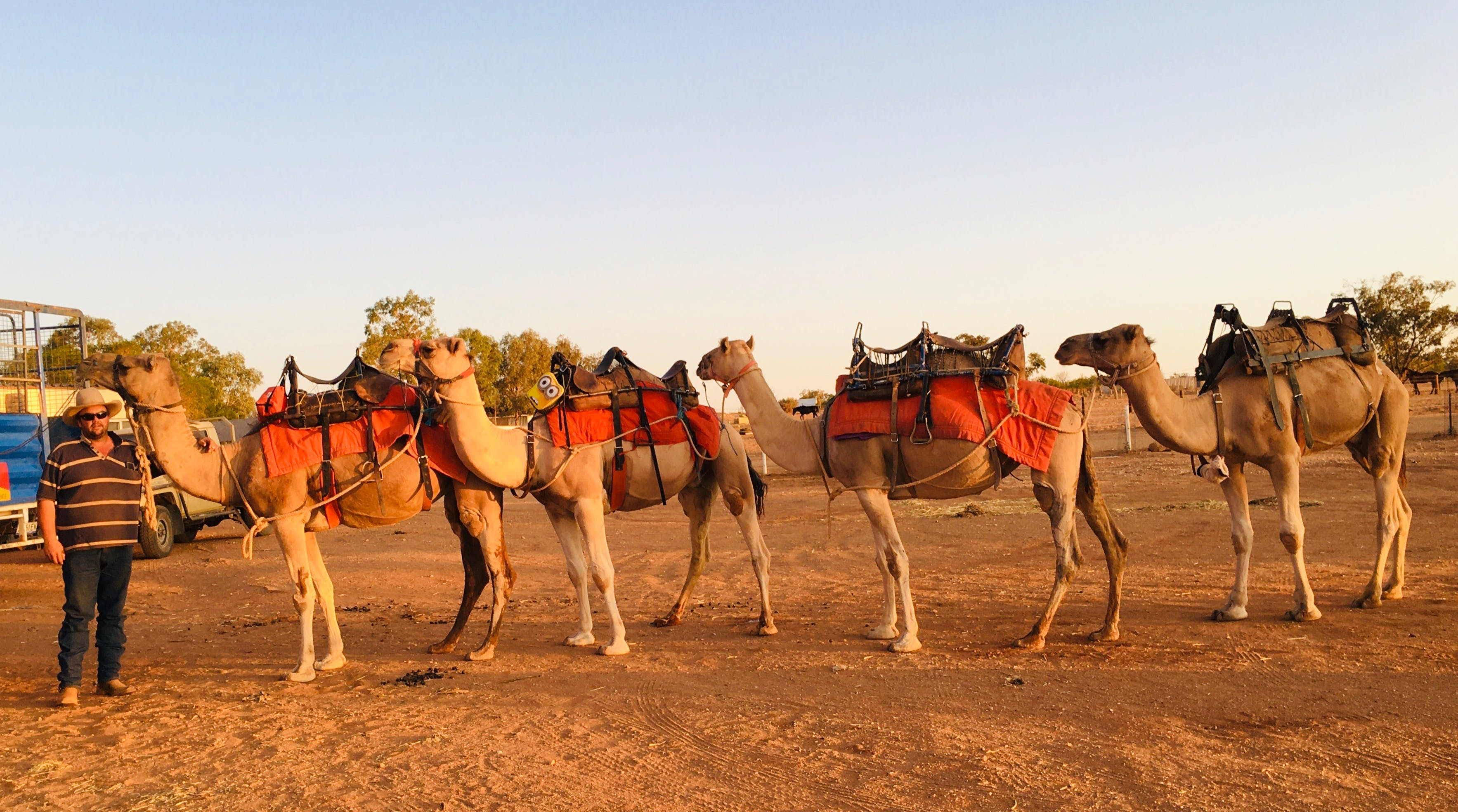 Broken Hill Camels - Accommodation Perth