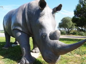 Tailem Bend Rhino Park and Dickson Reserve - Accommodation Perth