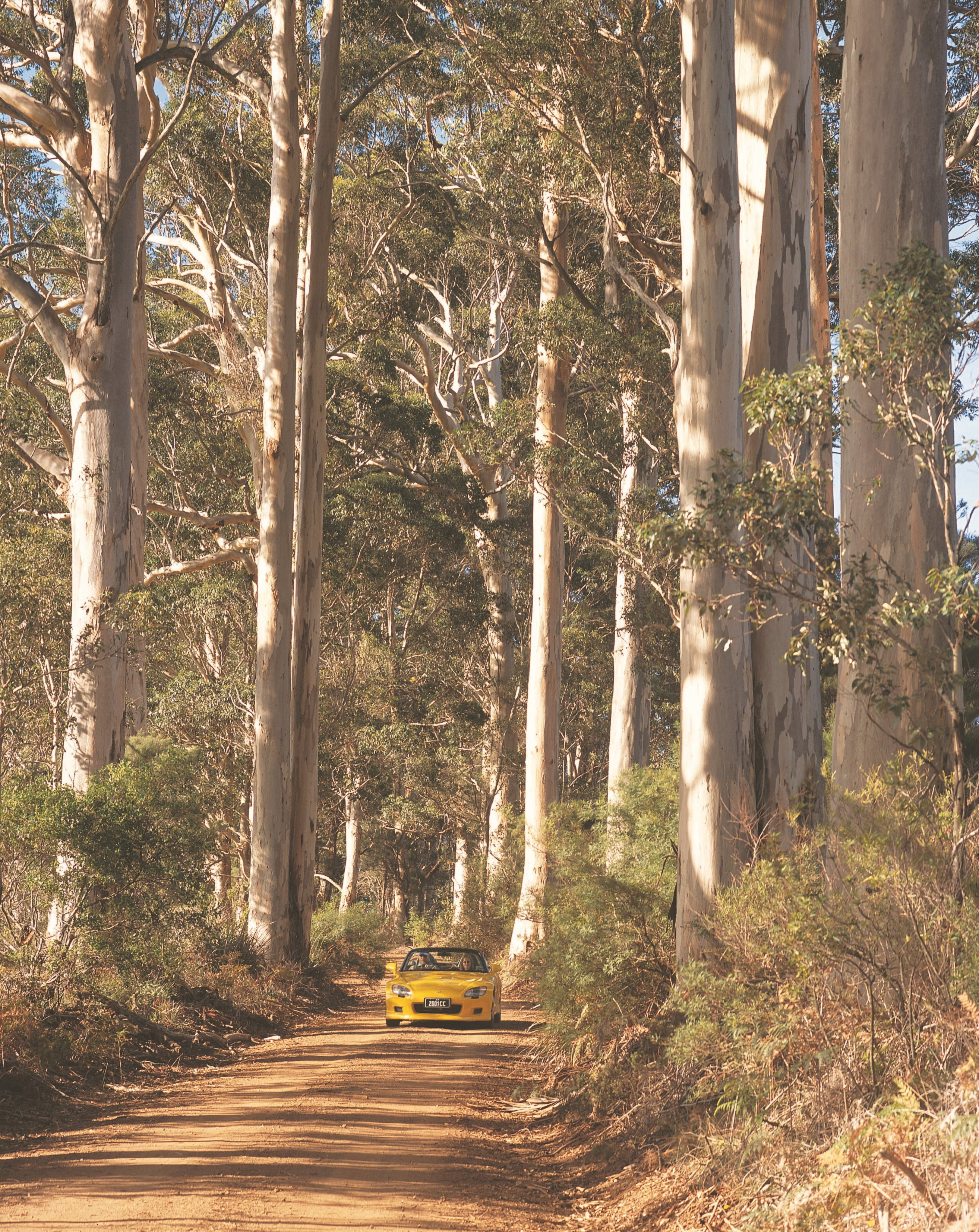 The Great Forest Trees Drive - Accommodation Perth