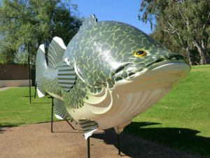 Big Murray Cod - Accommodation Perth