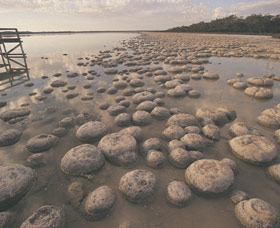 Lake Clifton Thrombolites - Accommodation Perth