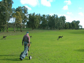 Coffin Bay Golf Club - Accommodation Perth