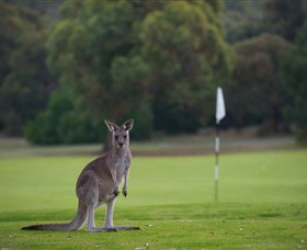 Anglesea Golf Club - Accommodation Perth