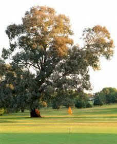 Cowra Golf Club - Accommodation Perth