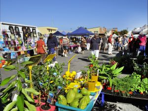 Maclean Community Monthly Markets - Accommodation Perth