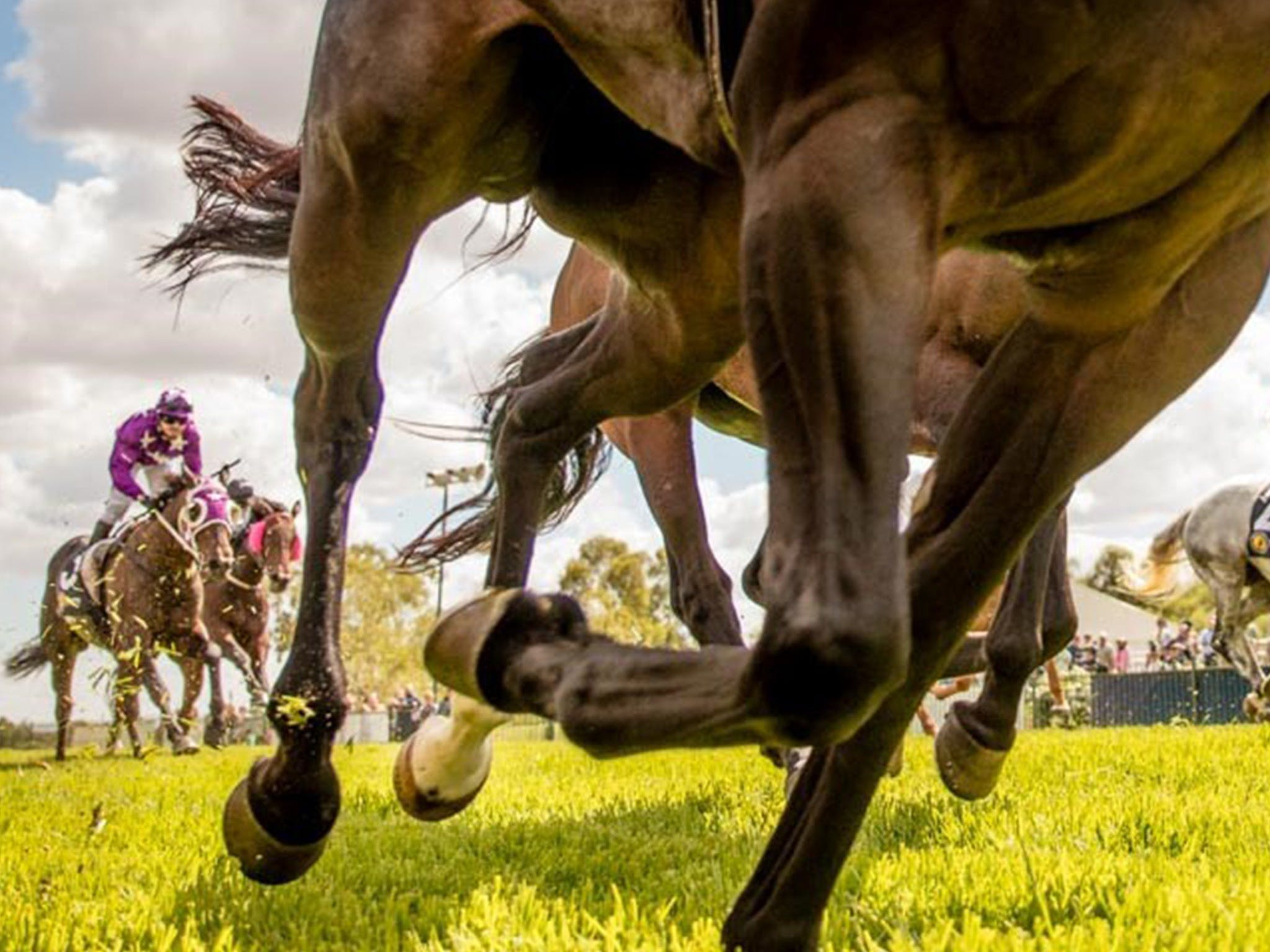 Night Markets and Race Day - Accommodation Perth