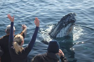 Eden Whale Festival - Accommodation Perth