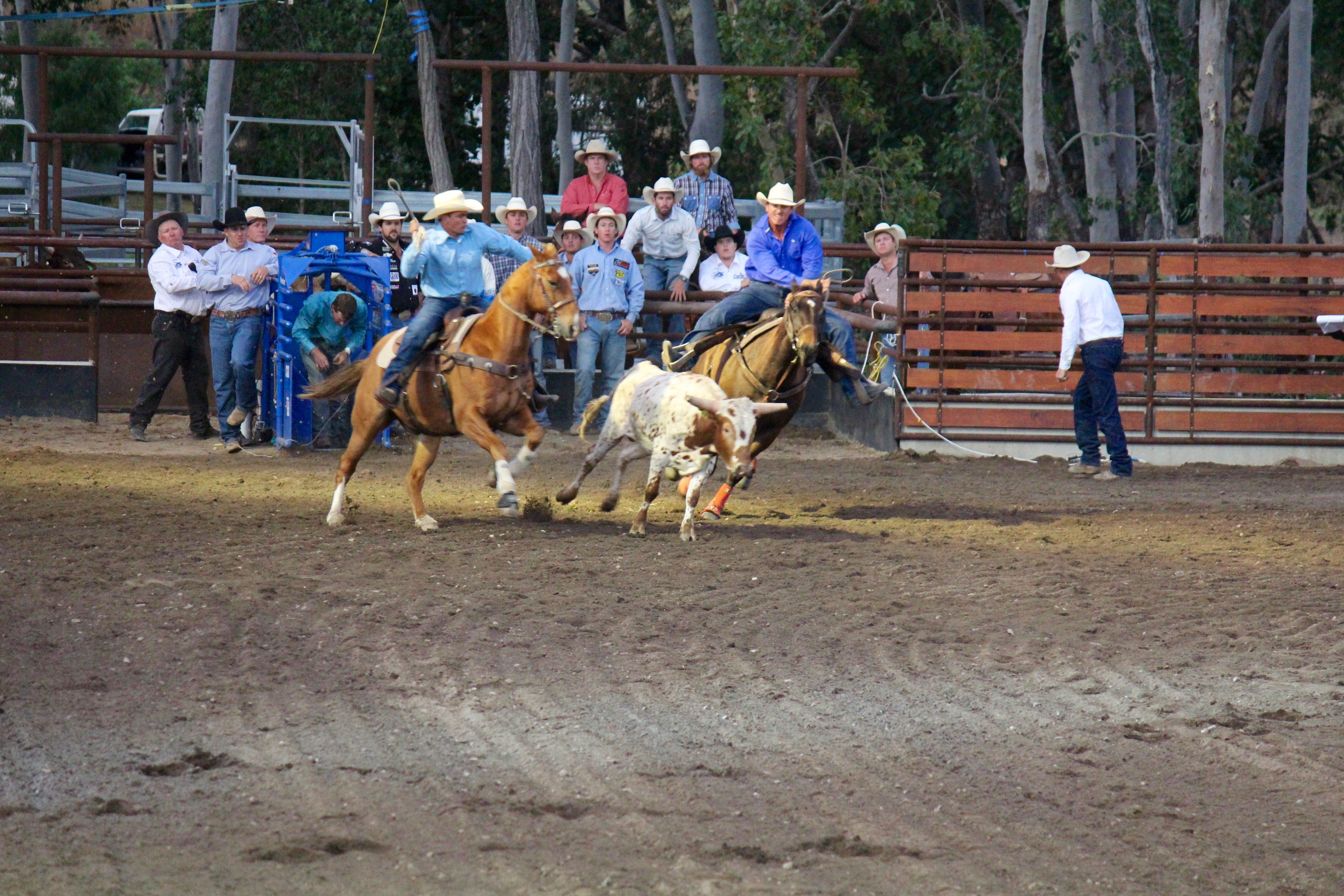 North Queensland Elite Rodeo - Accommodation Perth