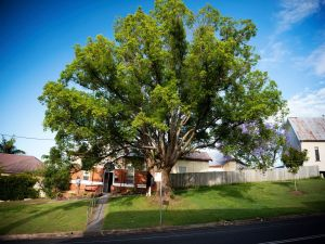 Big Bat Wildlife and Eco Festival - Accommodation Perth