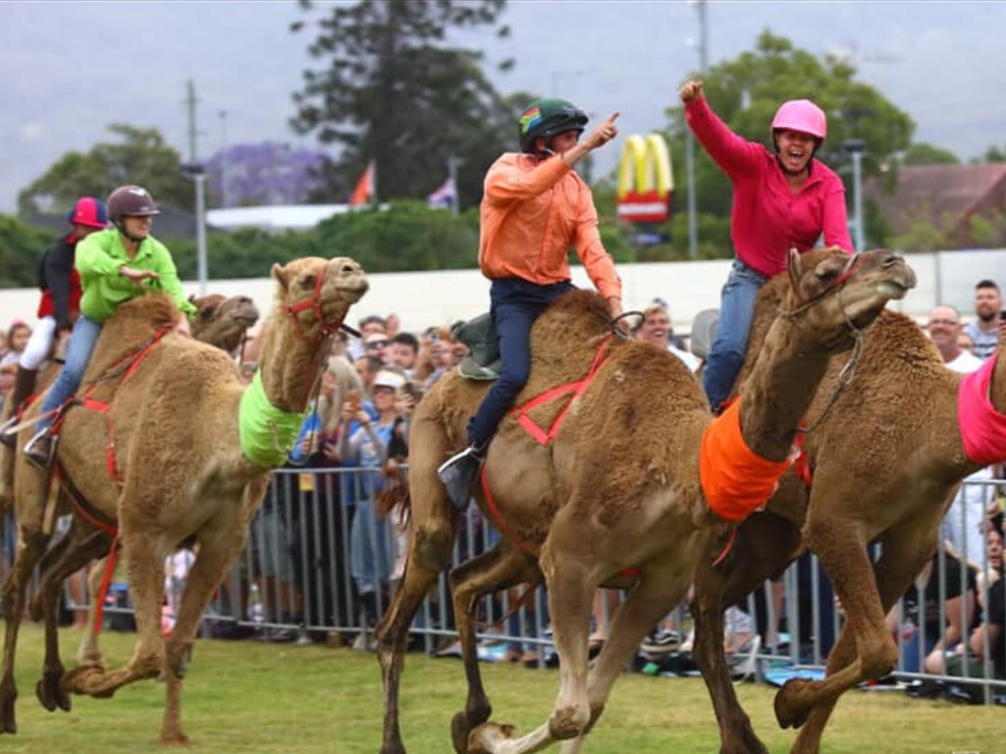 Camel Races at Penrith Paceway - Accommodation Perth