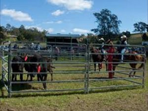 Dungog Team Penning - Accommodation Perth