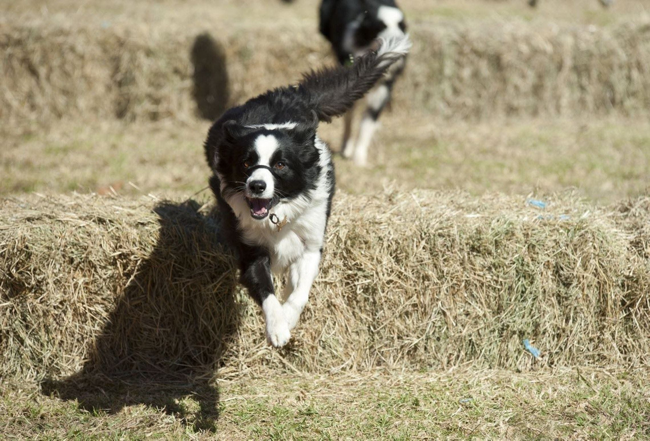 Great Nundle Dog Race - Accommodation Perth