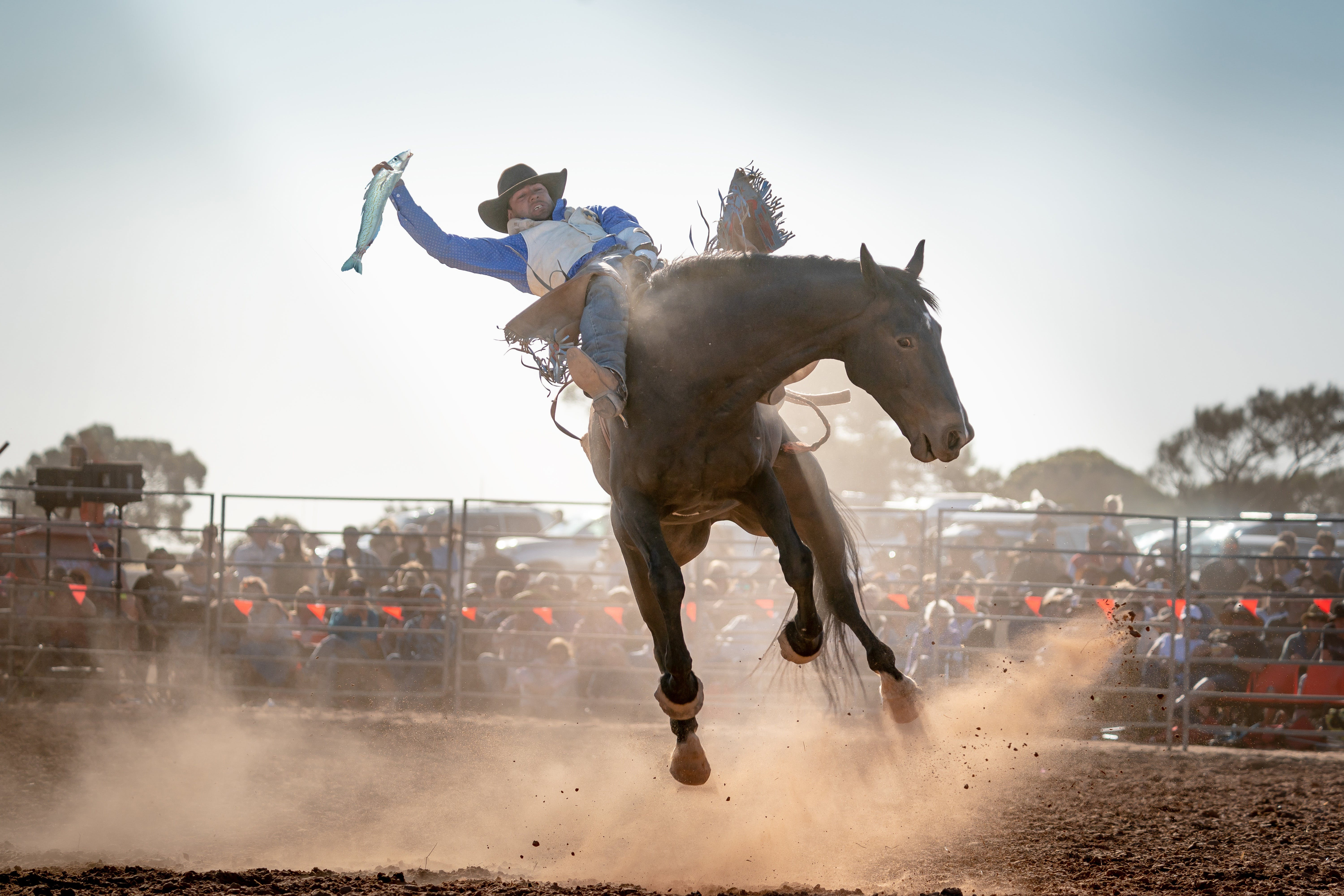 Rodeo by the Sea - Streaky Bay - Accommodation Perth