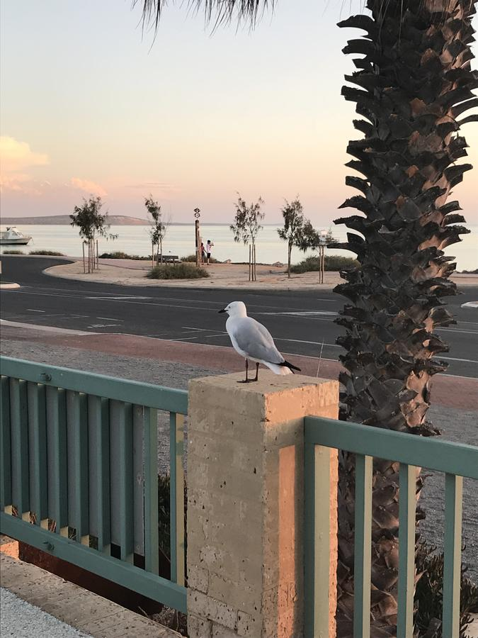 Shark Bay Seafront Apartments - Accommodation Perth