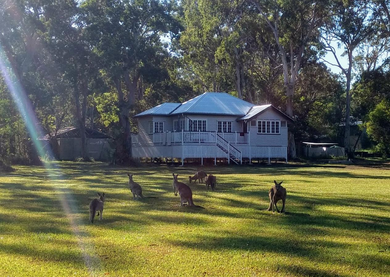 Lake Weyba Noosa Lodge  Kangaroos - Accommodation Perth
